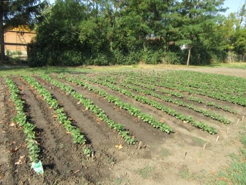 Közfoglalkoztatás - mezőgazdasági program
